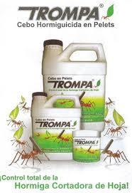 TROMPA1